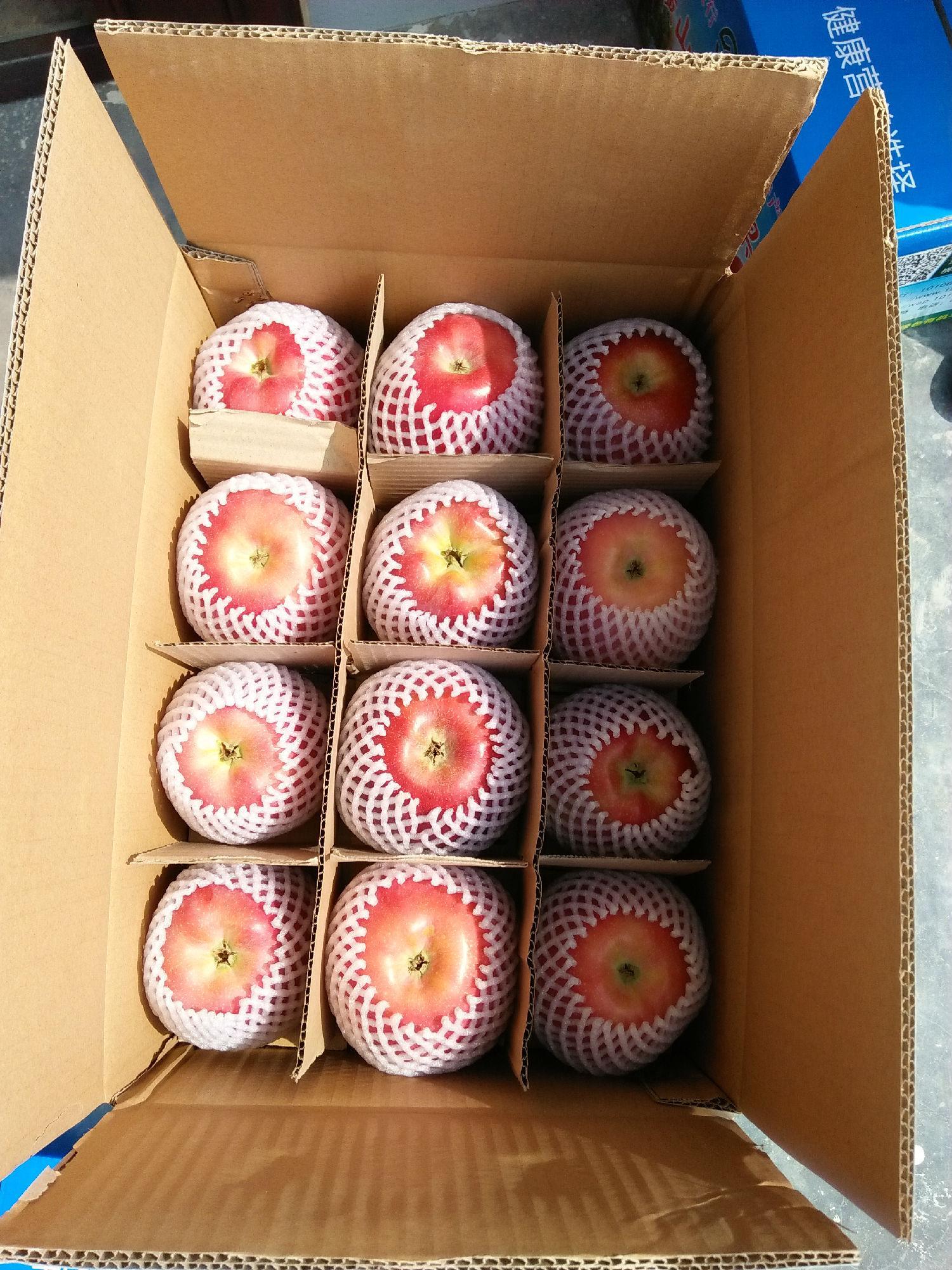 延安市宝塔区副区长王文忠回到家乡检查指导山地苹果